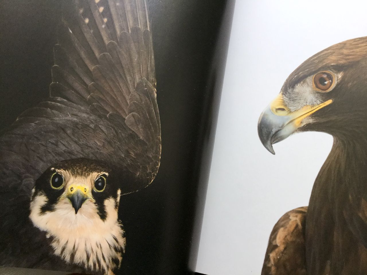 Joel Sartore, Photo Ark Uccelli, White Star