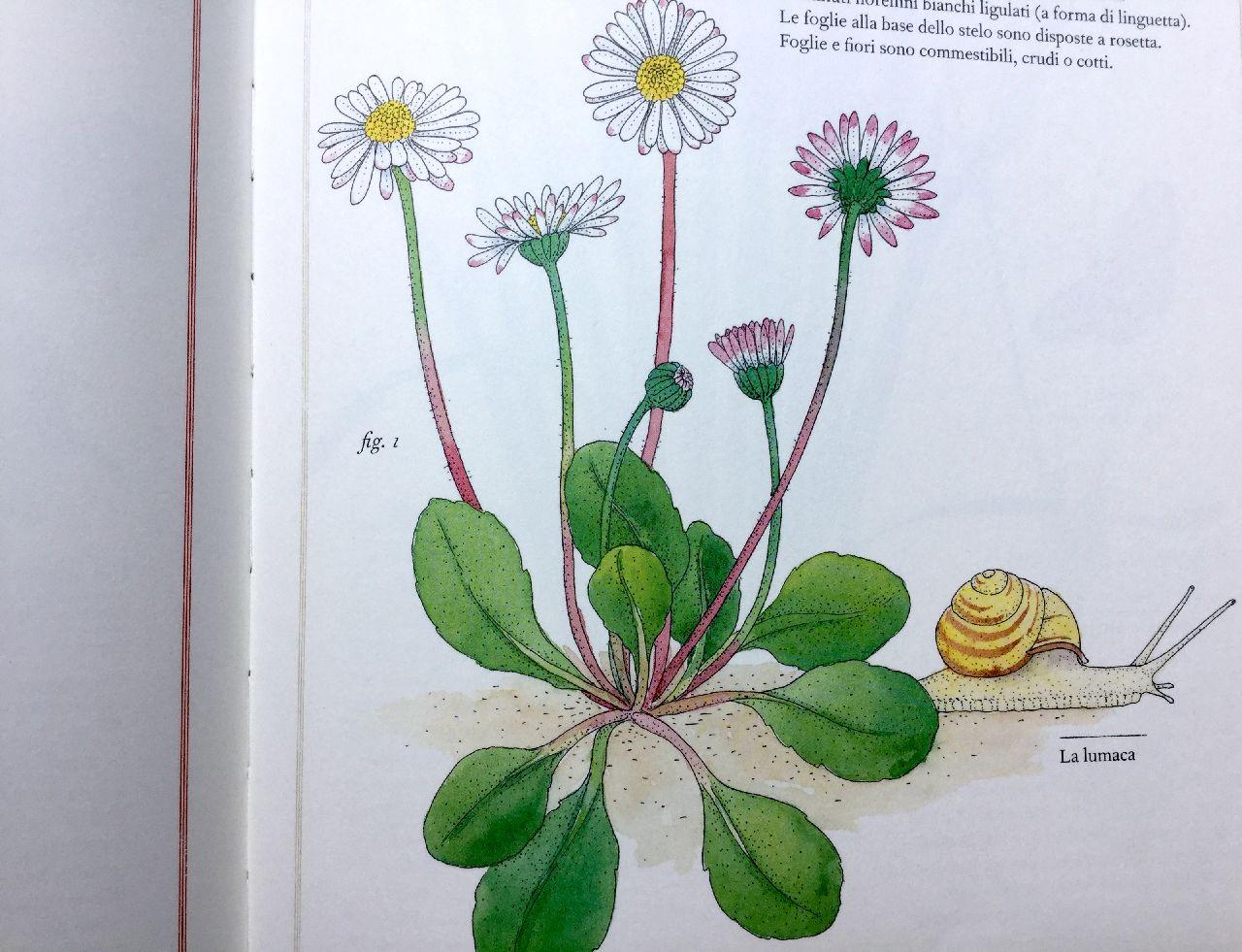 Virginie Aladjidi - Emmanuelle, Inventario illustrato dei fiori, L'ippocampo