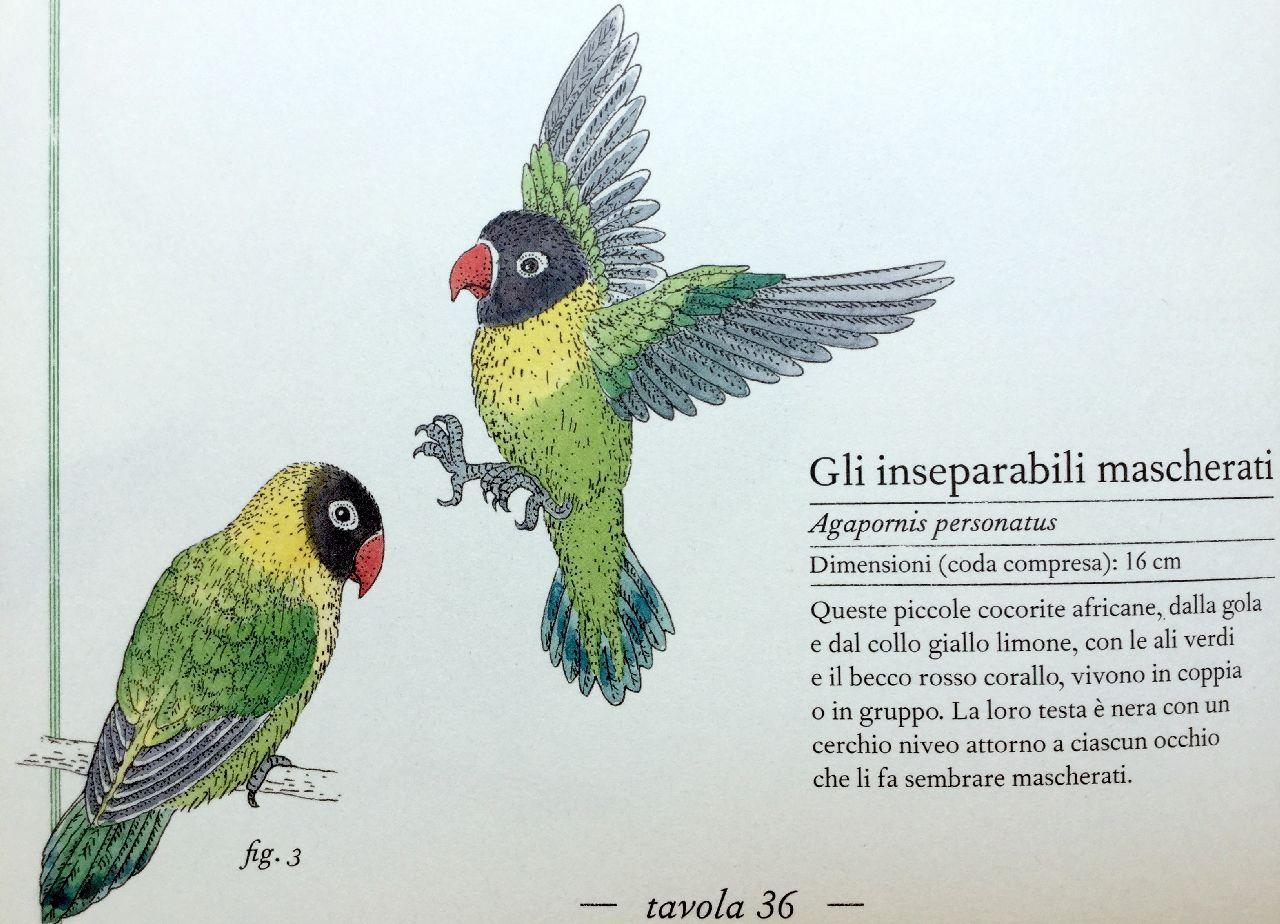 Virginie Aladjidi - Emmanuelle Tchoukriel, Inventario illustrato degli uccelli, L'ippocampo