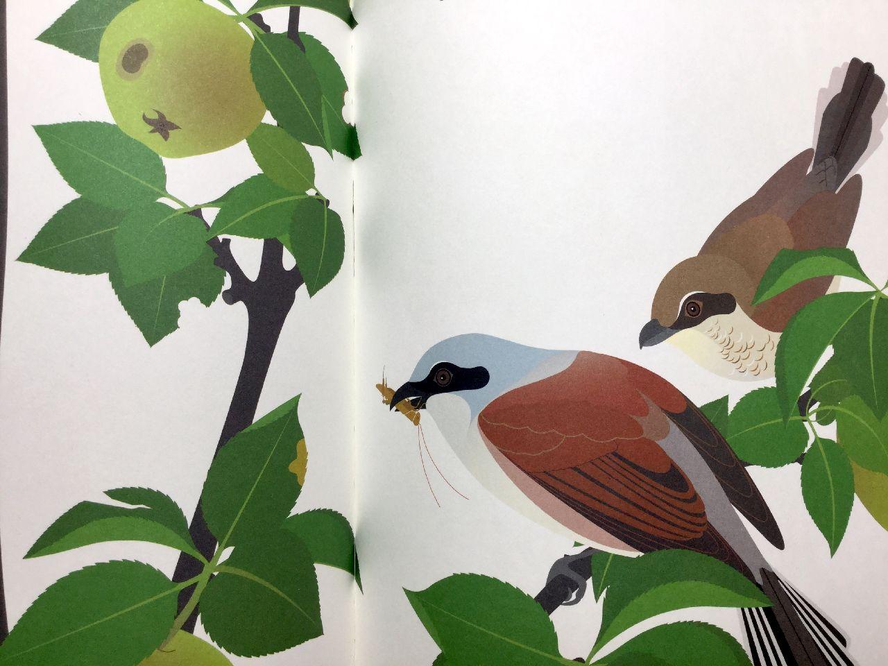 Anne Crausaz, Le quattro stagioni di un ramo di melo, L'ippocampo