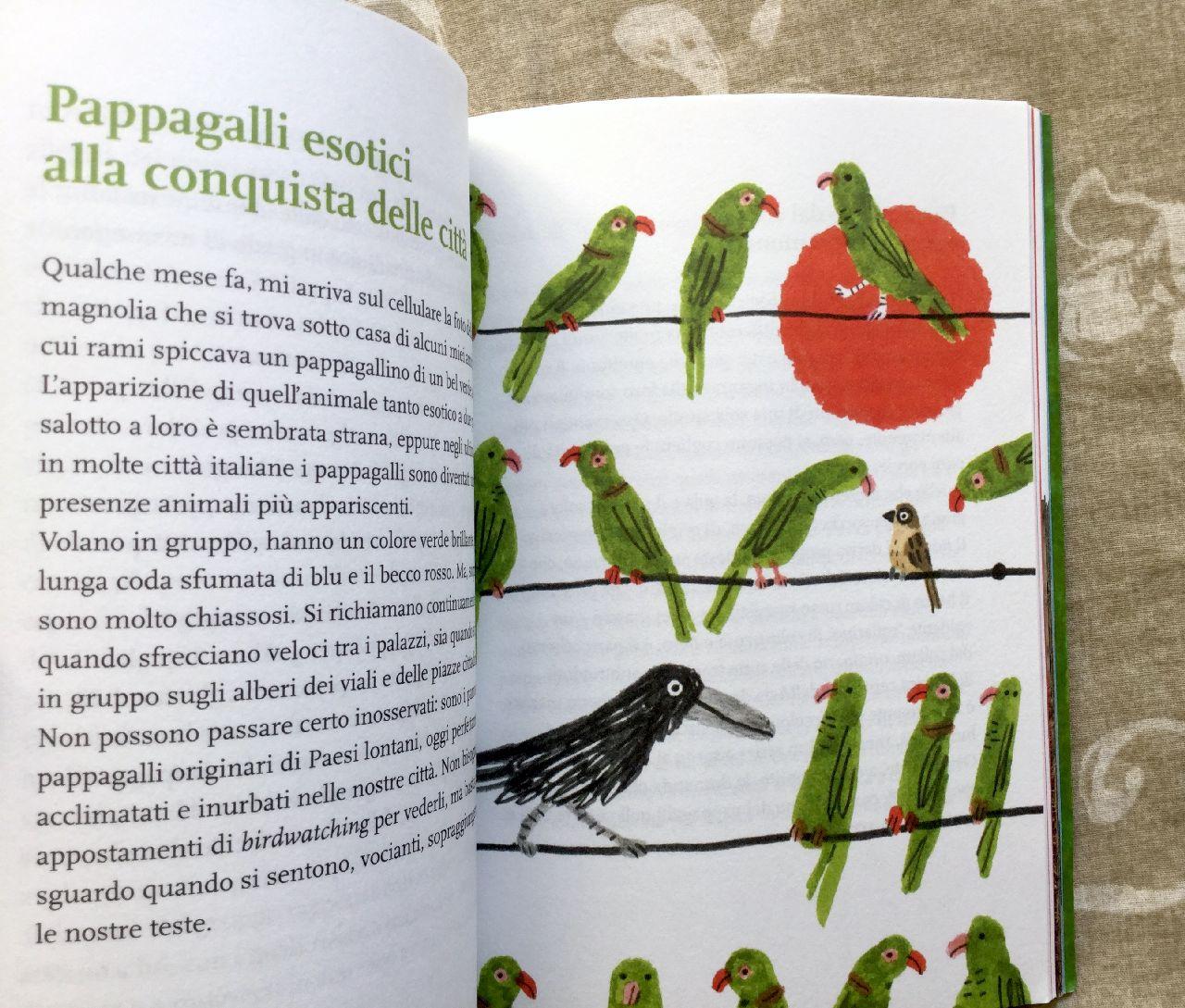 Bruno Cignini - Andrea Antinori, Animali in città, Lapis